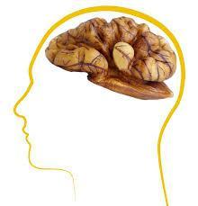 walnoten en hersenen
